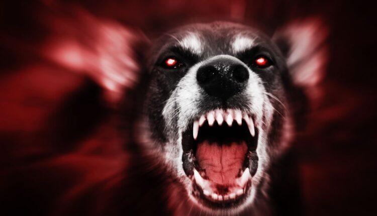 burglar-shot-homeowner-bitten-dog.jpg